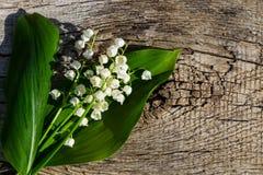 Κρίνος των λουλουδιών κοιλάδων στο ξύλινο υπόβαθρο Στοκ Εικόνες