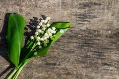 Κρίνος των λουλουδιών κοιλάδων στο ξύλινο υπόβαθρο Στοκ φωτογραφίες με δικαίωμα ελεύθερης χρήσης
