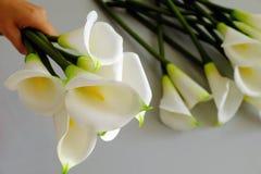 Κρίνος Arum στο λευκό Στοκ Εικόνες