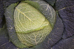 κραμπολάχανο λάχανων Στοκ Εικόνα
