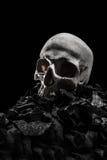 Κρανία Grunge Στοκ Εικόνα