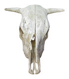 Κρανίο αγελάδων Στοκ Φωτογραφίες