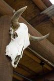κρανίο αγελάδων Στοκ εικόνες με δικαίωμα ελεύθερης χρήσης