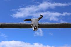 Κρανίο αγελάδων αγροκτημάτων Στοκ εικόνες με δικαίωμα ελεύθερης χρήσης