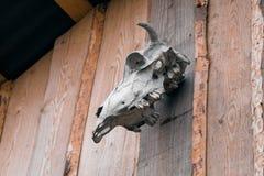 Κρανίο αγελάδων στον ξύλινο τοίχο Στοκ Εικόνες