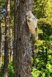 Κρανίο αγελάδων στο δέντρο στο δάσος Στοκ φωτογραφία με δικαίωμα ελεύθερης χρήσης