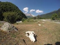 κρανίο αλόγων στην όχθη ποταμού στα βουνά της Γεωργίας Στοκ φωτογραφία με δικαίωμα ελεύθερης χρήσης