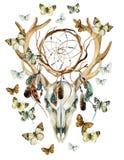 Κρανίο ελαφιών Ζωικό κρανίο με το dreamcather και την πεταλούδα Στοκ εικόνα με δικαίωμα ελεύθερης χρήσης