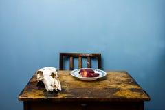 Κρανίο και καρδιά αιγών στο ξύλινο γραφείο Στοκ φωτογραφία με δικαίωμα ελεύθερης χρήσης