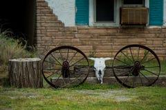 κρανίο Κεφάλι αγελάδων στοκ εικόνα