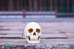 Κρανίο κοντά στο δρόμο Κίνδυνος προσοχής στη δολοφονία τροχαίων ατυχημάτων Στοκ Φωτογραφία
