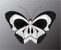 κρανίο πεταλούδων Στοκ φωτογραφία με δικαίωμα ελεύθερης χρήσης