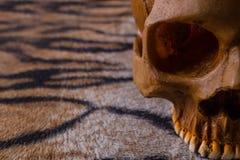 Κρανίο στην εικόνα δερμάτων τιγρών Στοκ φωτογραφία με δικαίωμα ελεύθερης χρήσης