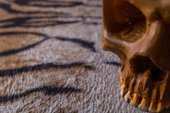 Κρανίο στην εικόνα δερμάτων τιγρών Στοκ φωτογραφίες με δικαίωμα ελεύθερης χρήσης