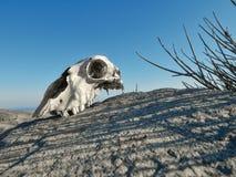 Κρανίο στο νησί της Τήνου Στοκ εικόνες με δικαίωμα ελεύθερης χρήσης