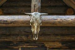 Κρανίο του ζώου στο ξύλινο υπόβαθρο Στοκ φωτογραφίες με δικαίωμα ελεύθερης χρήσης