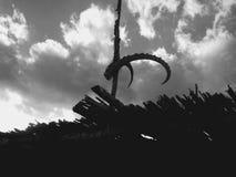 κρανίο Στοκ φωτογραφίες με δικαίωμα ελεύθερης χρήσης