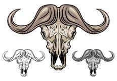 Κρανίο Buffalo που απομονώνεται στο λευκό Στοκ Εικόνα