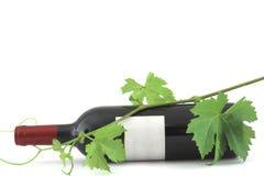 κρασί αμπέλων φύλλων μπου&kappa Στοκ Φωτογραφίες