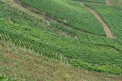 κρασί αμπελώνων στοκ εικόνα