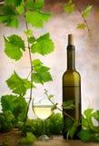 Κρασί και άμπελος στοκ εικόνα