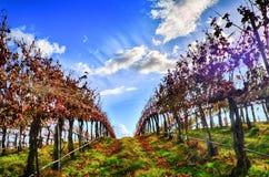 κρασί κοιλάδων βουνών χωρών στοκ εικόνες με δικαίωμα ελεύθερης χρήσης