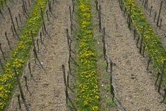 κρασί σειρών στοκ εικόνες
