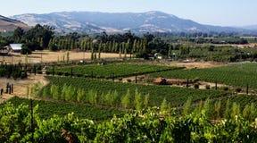 κρασί χωρών Καλιφόρνιας Στοκ Φωτογραφία