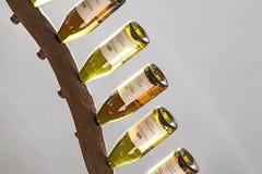 Κρασιά Riesling σε ένα ράφι κρασιού στο μοναστήρι Ebersbach στοκ φωτογραφία