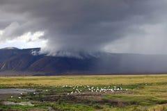 Κρατήρας Ngorongoro Στοκ Εικόνες