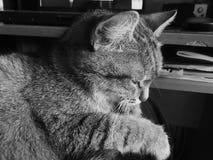Κρατήστε ήρεμος, το γατάκι μου στοκ εικόνες με δικαίωμα ελεύθερης χρήσης