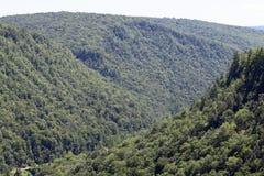 Κρατικό δάσος Tioga Στοκ Εικόνα