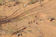 Κρατικό πάρκο αμμόλοφων άμμου κοραλλιών ρόδινο, Γιούτα, ΗΠΑ στοκ φωτογραφίες με δικαίωμα ελεύθερης χρήσης