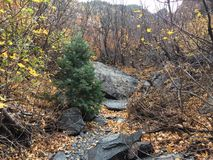 Κρατικό πάρκο βουνών Wasatch Στοκ Εικόνες