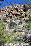 Κρατικό πάρκο δενδρολογικών κήπων Thompson Boyce, ανώτερος, Αριζόνα Ηνωμένες Πολιτείες Στοκ Εικόνα