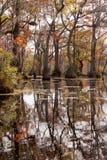 Κρατικό πάρκο ΗΠΑ δεξαμενών υδρόμυλου NC εμπόρων υγρότοπου πτώσης Στοκ Εικόνα