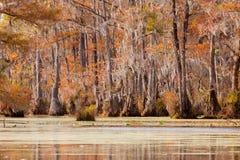 Κρατικό πάρκο ΗΠΑ δεξαμενών υδρόμυλου NC εμπόρων υγρότοπου Tupelo Στοκ εικόνες με δικαίωμα ελεύθερης χρήσης