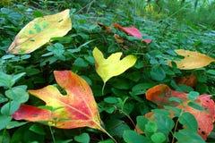 Κρατικό πάρκο Ιλλινόις Hazlet Eldon Στοκ φωτογραφίες με δικαίωμα ελεύθερης χρήσης