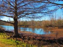 Κρατικό πάρκο κάμψεων Brazos Στοκ Φωτογραφίες