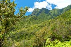 Κρατικό πάρκο κοιλάδων Iao σε Maui Χαβάη στοκ φωτογραφίες