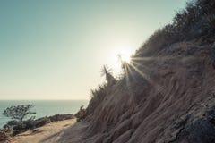 Κρατικό πάρκο πεύκων Torrey στο Σαν Ντιέγκο προς το τέλος του ήλιου απογεύματος Φλόγα ήλιων στην εικόνα στοκ εικόνες