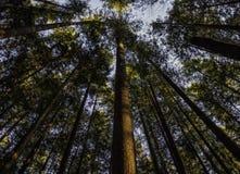 Κρατικό πάρκο πτώσεων Wallace Στοκ Εικόνες