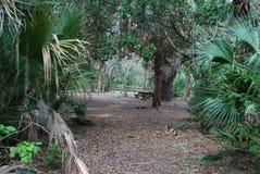 Κρατικό πάρκο του Oscar Scherer στοκ εικόνα