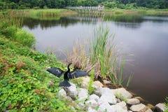 Κρατικό πάρκο Χάντινγκτον Μπιτς Στοκ φωτογραφία με δικαίωμα ελεύθερης χρήσης