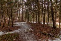 Κρατικό πάρκο Amnicon, Ουισκόνσιν κατά τη διάρκεια του χειμώνα στοκ φωτογραφία με δικαίωμα ελεύθερης χρήσης