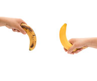Κρατώντας μια φρέσκια μπανάνα επάνω και over-ripe συμπαθήστε κάτω το πέος των ατόμων ως έννοια δύναμης με το ψαλίδισμα της πορεία στοκ φωτογραφία με δικαίωμα ελεύθερης χρήσης
