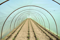 Κρεβάτια θερμοκηπίων και κήπων της ντομάτας Στοκ φωτογραφία με δικαίωμα ελεύθερης χρήσης