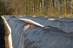 Κρεβάτια με την καλλιέργεια σπαραγγιού πριν από τη συγκομιδή που βλέπει από το δευτερεύον φορτηγό Twente Hof στοκ εικόνα