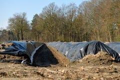 Κρεβάτια με την καλλιέργεια σπαραγγιού πριν από τη συγκομιδή που βλέπει από το φορτηγό Twente Hof μπροστινής πλευράς στοκ φωτογραφίες
