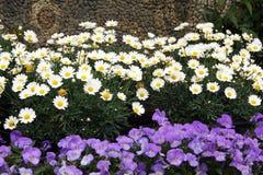 Κρεβάτια λουλουδιών άνοιξη Στοκ Εικόνα